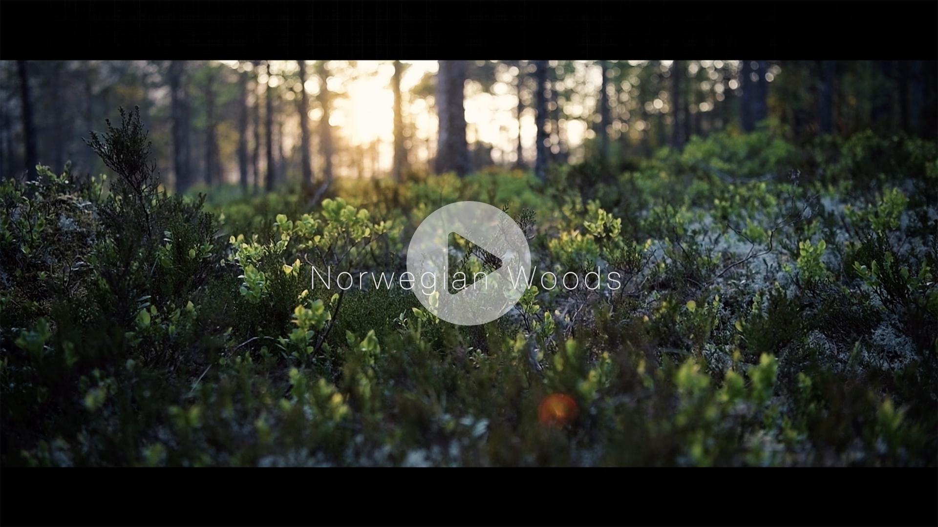 HellwigStudios Reimo - Norwegian Woods